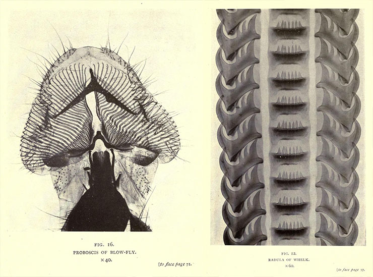 Nature-through-Microscope-and-Camera-Arthur-E-Smith-1909-image02