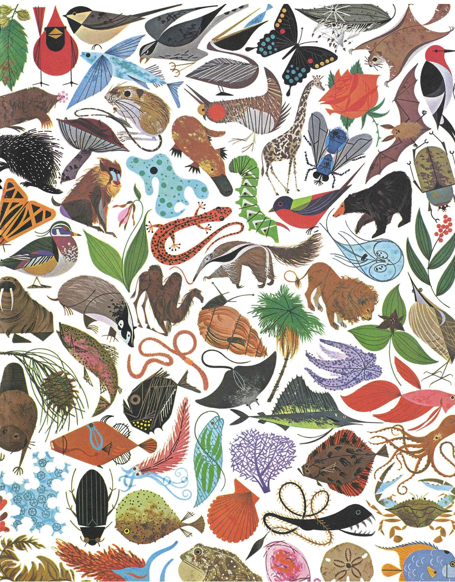 charley-harper-bio_mosaic